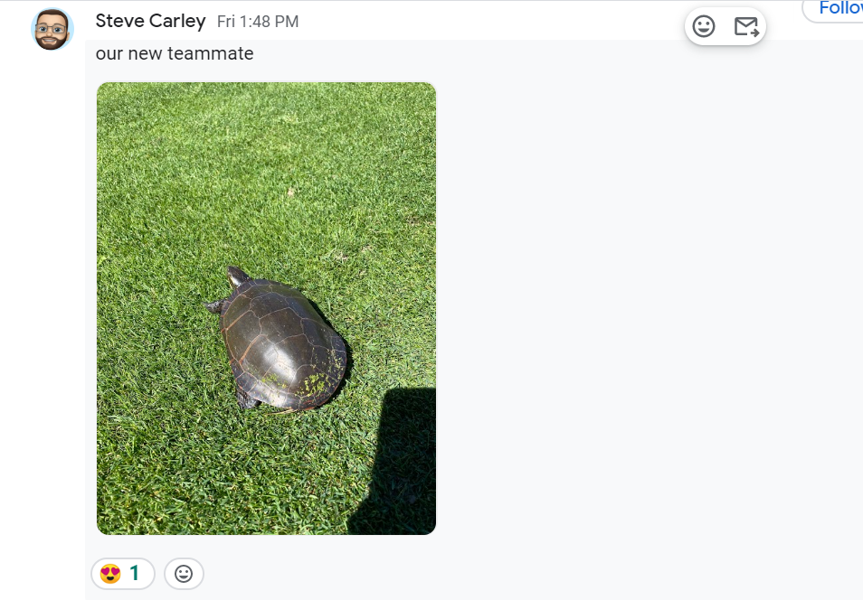 Steve makes friends with a turtle on the golf course.